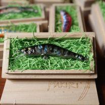 "HONNAMI SPIRIT Handmade Minnow  MAKIRI   ""Parch"" 6㎝・8ℊ・SSS"
